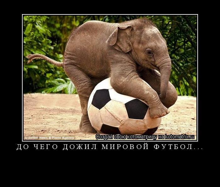 Котоматрица: до чего дожил мировой футбол...