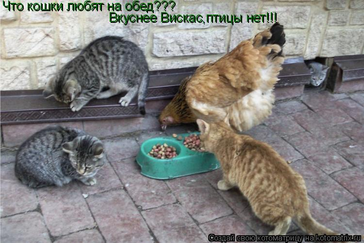 Котоматрица: Что кошки любят на обед??? Вкуснее Вискас,птицы нет!!!