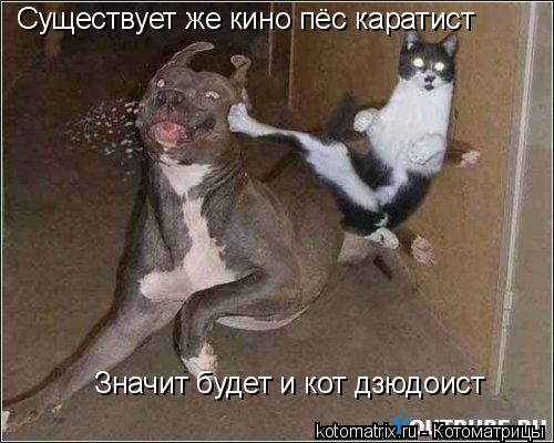 Котоматрица: Существует же кино пёс каратист Значит будет и кот дзюдоист