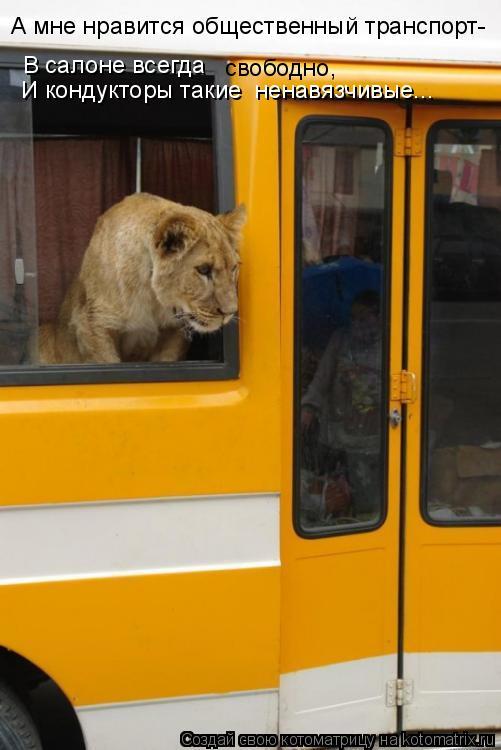 Котоматрица: А мне нравится общественный транспорт- В салоне всегда  И кондукторы такие  ненавязчивые... свободно,