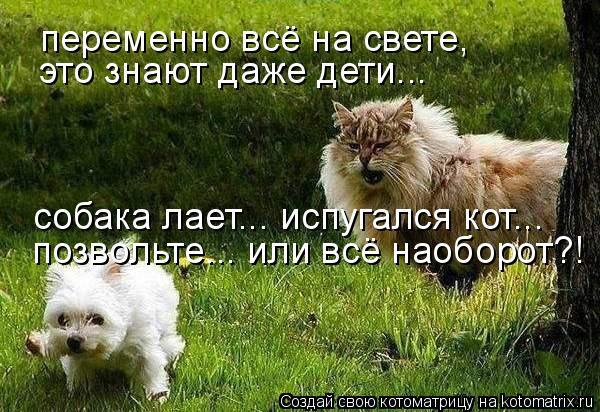 позвольте... или всё наоборот?! собака лает... испугался кот... это зн