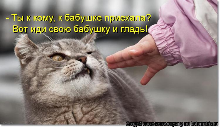 Котоматрица: - Ты к кому, к бабушке приехала? Вот иди свою бабушку и гладь!