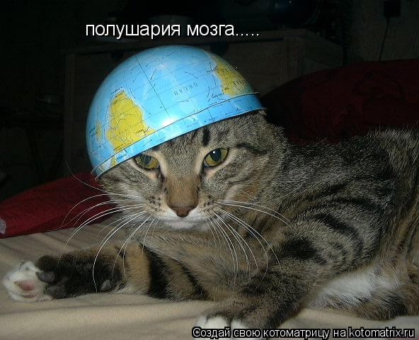 Котоматрица: полушария мозга.....
