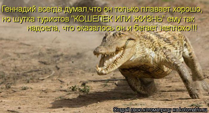 """Котоматрица: Геннадий всегда думал,что он только плавает хорошо, но шутка туристов """"КОШЕЛЕК ИЛИ ЖИЗНЬ"""" ему так  надоела, что оказалось он и бегает неплохо"""