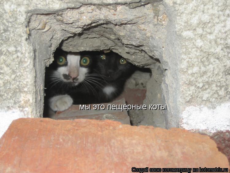 Котоматрица: мы это пещерные коты