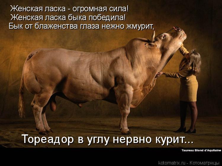 Котоматрица: Женская ласка - огромная сила! Женская ласка быка победила! Бык от блаженства глаза нежно жмурит, Тореадор в углу нервно курит...