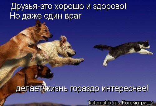 Котоматрица: Друзья-это хорошо и здорово! Но даже один враг делает жизнь гораздо интереснее!