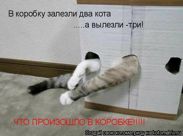 Котоматрица: В коробку залезли два кота .....а вылезли -три! ЧТО ПРОИЗОШЛО В КОРОБКЕ!!!!!