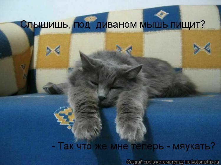 Котоматрица: Слышишь, под  диваном мышь пищит?  - Так что же мне теперь - мяукать?