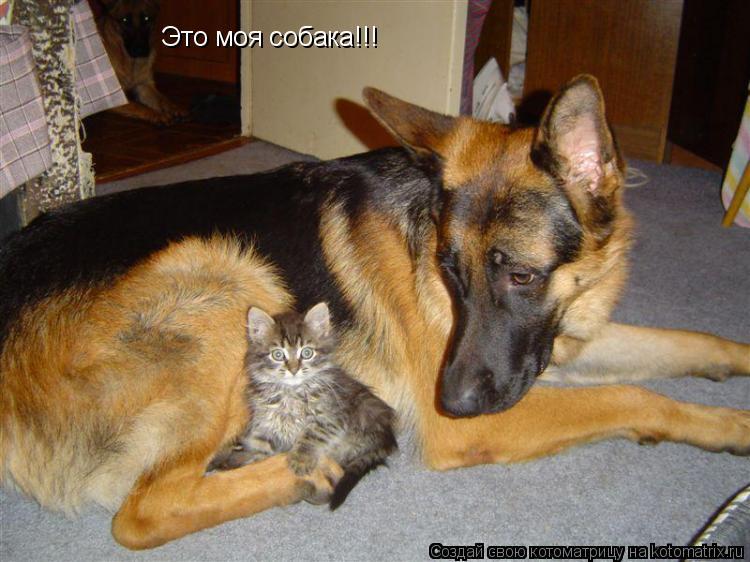 Котоматрица: Это моя собака!!!