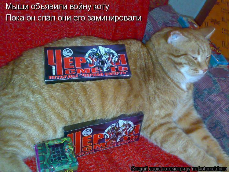 Котоматрица: Мыши объявили войну коту Пока он спал они его заминировали