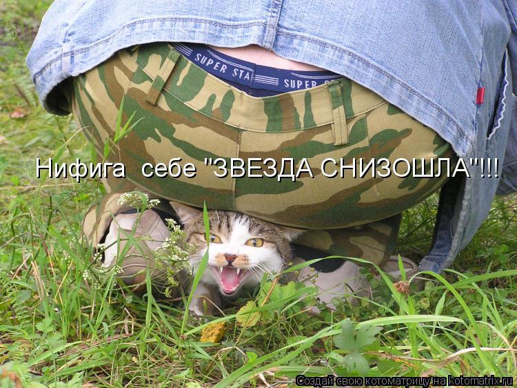 """Котоматрица: Нифига  себе """"ЗВЕЗДА СНИЗОШЛА""""!!!"""