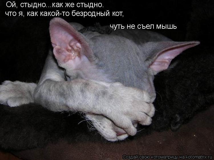 Котоматрица: Ой, стыдно...как же стыдно. что я, как какой-то безродный кот, чуть не съел мышь