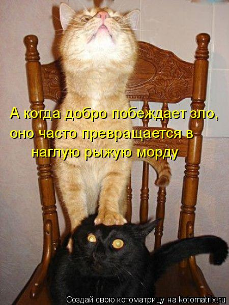 Котоматрица - А когда добро побеждает зло, оно часто превращается в  наглую рыжую мо