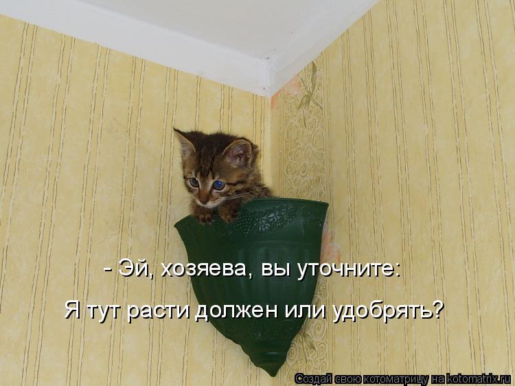 - Эй, хозяева, вы уточните: Я тут расти должен или удобрять?