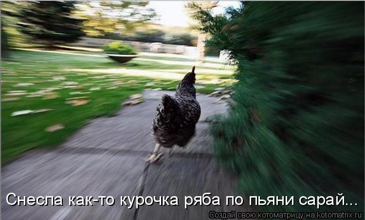 Котоматрица: Снесла как-то курочка ряба по пьяни сарай...