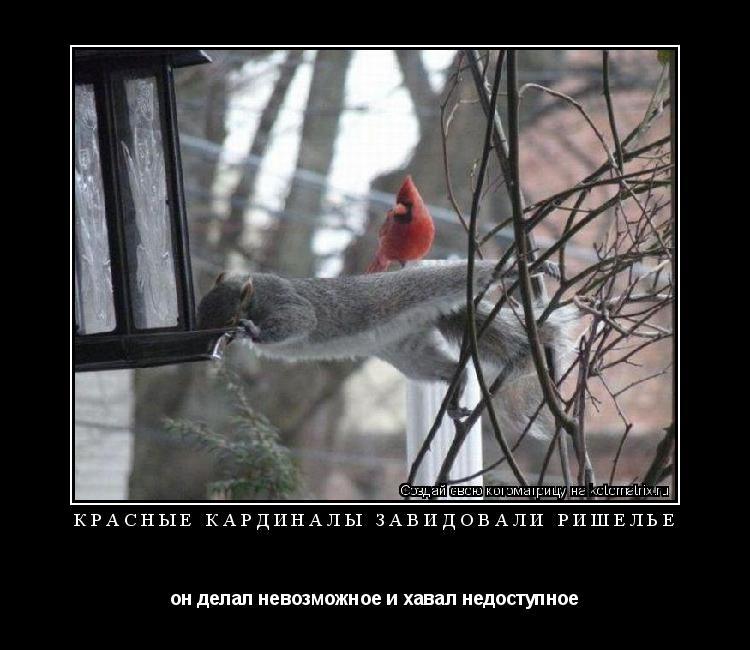 Котоматрица: красные кардиналы завидовали Ришелье он делал невозможное и хавал недоступное