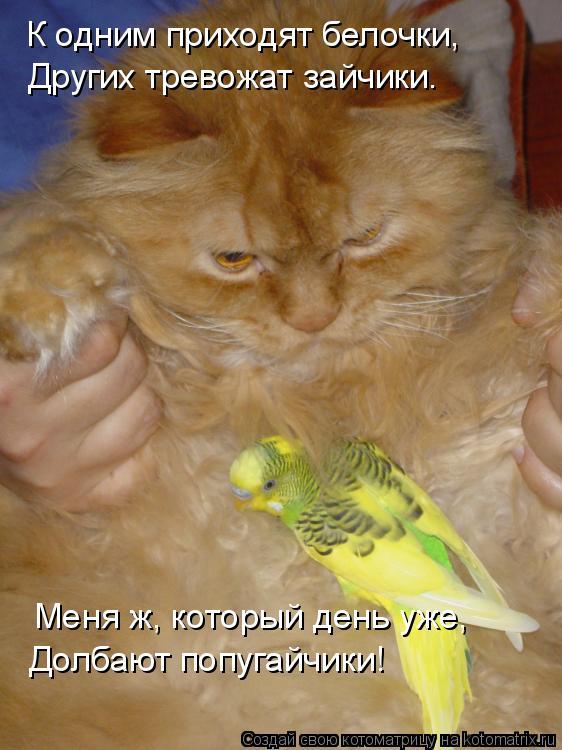 Котоматрица: К одним приходят белочки, Других тревожат зайчики. Меня ж, который день уже, Долбают попугайчики!