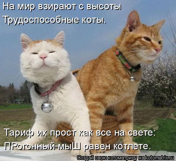 Котоматрица: На мир взирают с высоты  Трудоспособные коты. Тариф их прост как все на свете: ПРогонный мыШ равен котлете.