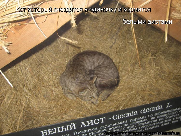 Котоматрица: Кот который гнездится в одиночку и кормится белыми аистами белыми аистами