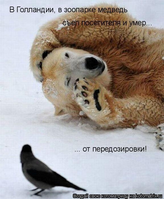 Котоматрица: В Голландии, в зоопарке медведь  съел посетителя и умер... ... от передозировки!