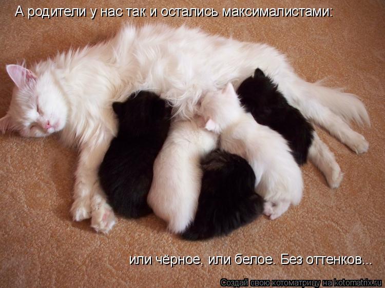Котоматрица: А родители у нас так и остались максималистами: или чёрное, или белое. Без оттенков...