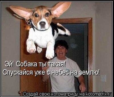 Котоматрица: Эй! Собака ты такая! Спускайся уже с небес на землю!