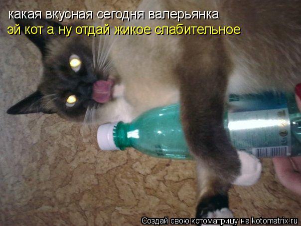 Котоматрица: какая вкусная сегодня валерьянка эй кот а ну отдай жикое слабительное