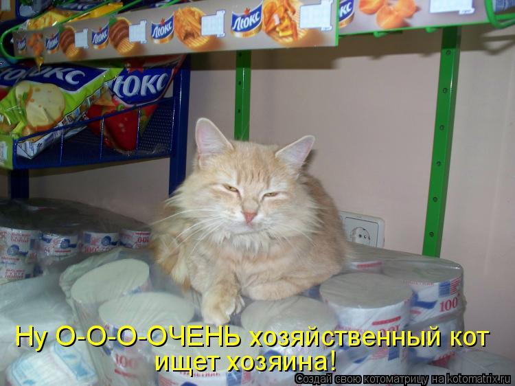 Котоматрица: Ну О-О-О-ОЧЕНЬ хозяйственный кот ищет хозяина!