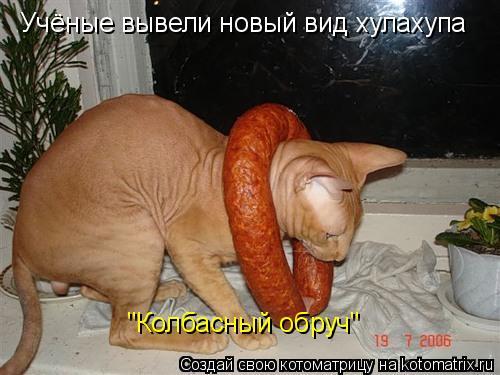 """Котоматрица: Учёные вывели новый вид хулахупа """"Колбасный обруч"""""""