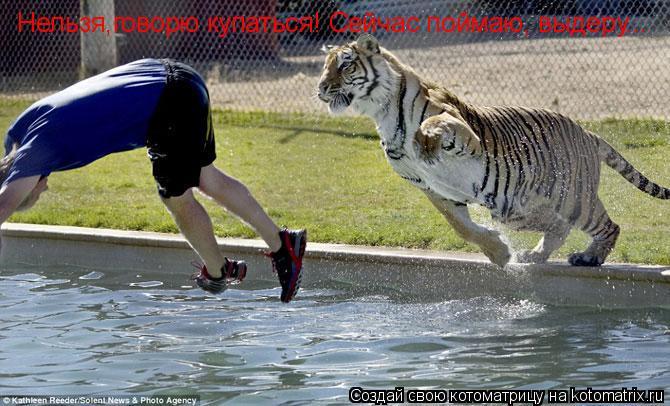 Котоматрица: Нельзя,говорю купаться! Сейчас поймаю, выдеру...