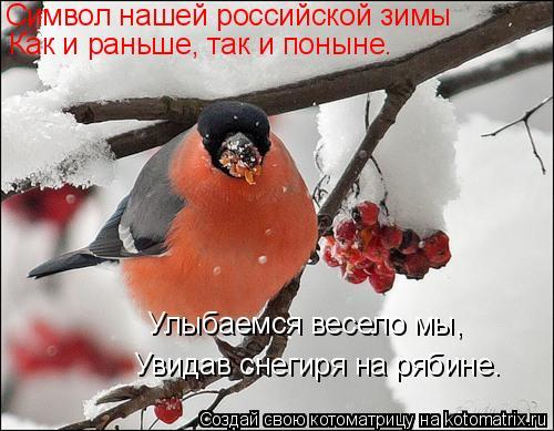 Котоматрица: Символ нашей российской зимы Как и раньше, так и поныне. Увидав снегиря на рябине. Улыбаемся весело мы,