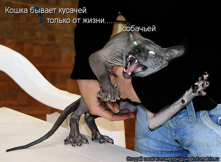 Котоматрица: Кошка бывает кусачей только от жизни......... собачьей