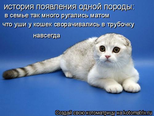 Котоматрица: история появления одной породы: в семье так много ругались матом что уши у кошек сворачивались в трубочку навсегда