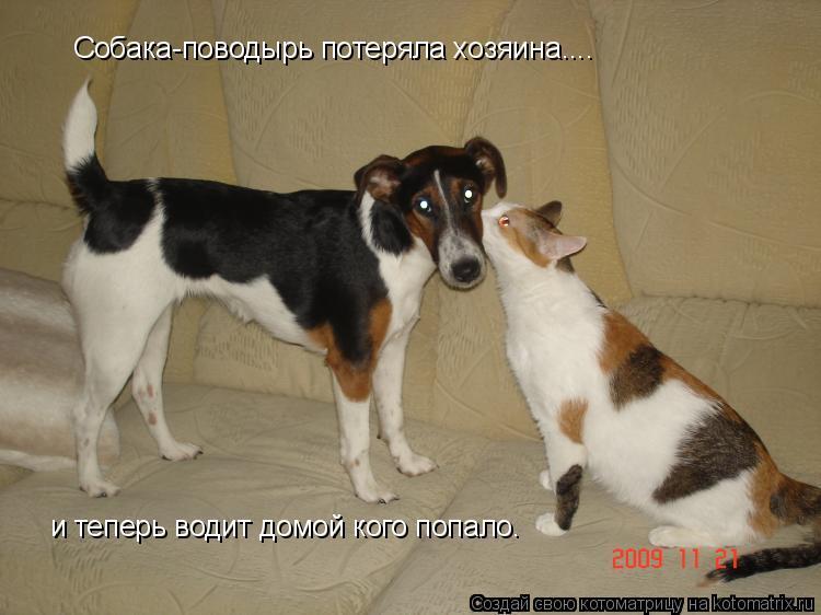 Котоматрица: Собака-поводырь потеряла хозяина....  и теперь водит домой кого попало.
