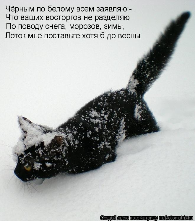 Котоматрица: Что ваших восторгов не разделяю Чёрным по белому всем заявляю - По поводу снега, морозов, зимы, Лоток мне поставьте хотя б до весны.