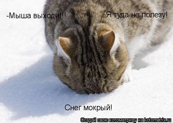 Котоматрица: -Мыша выходи!!! Я туда не полезу! Снег мокрый!