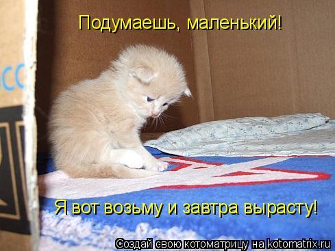 Котоматрица: Подумаешь, маленький! Я вот возьму и завтра вырасту!