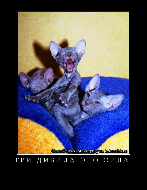 Котоматрица: Три дибила-это сила.