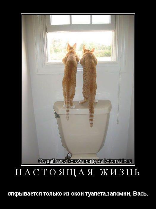 Котоматрица: настоящая жизнь открывается только из окон туалета.запомни, Вась.