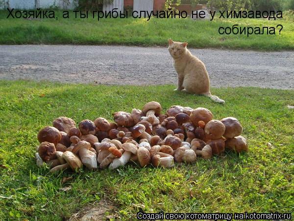 Котоматрица: Хозяйка, а ты грибы случайно не у химзавода собирала?