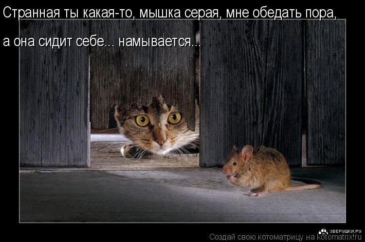 Котоматрица: Странная ты какая-то, мышка серая, мне обедать пора,  а она сидит себе... намывается...