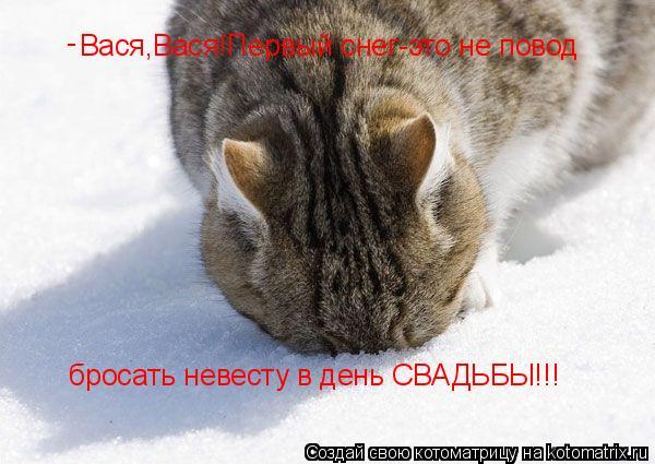 Котоматрица: Вася,Вася!Первый снег-это не повод  бросать невесту в день СВАДЬБЫ!!! -