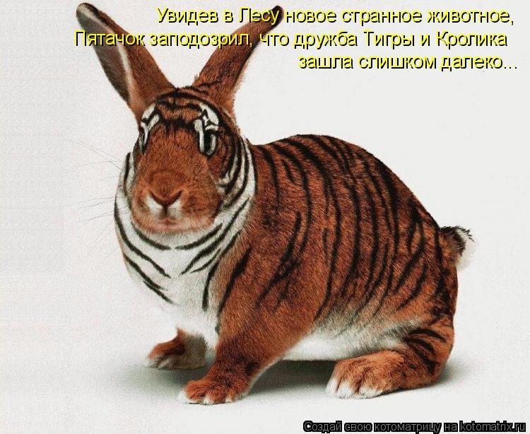 Котоматрица: Увидев в Лесу новое странное животное,  Пятачок заподозрил, что дружба Тигры и Кролика зашла слишком далеко...