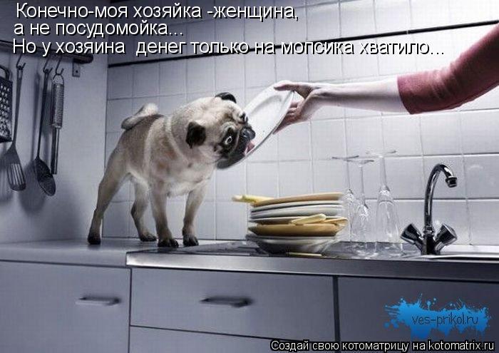 Котоматрица: Конечно-моя хозяйка -женщина, а не посудомойка... Но у хозяина  денег только на мопсика хватило...