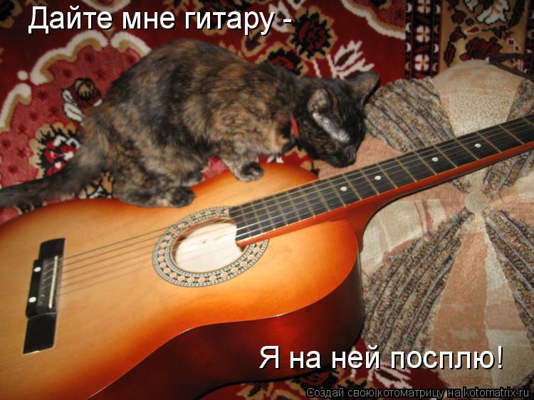 Котоматрица: Дайте мне гитару -  Я на ней посплю!