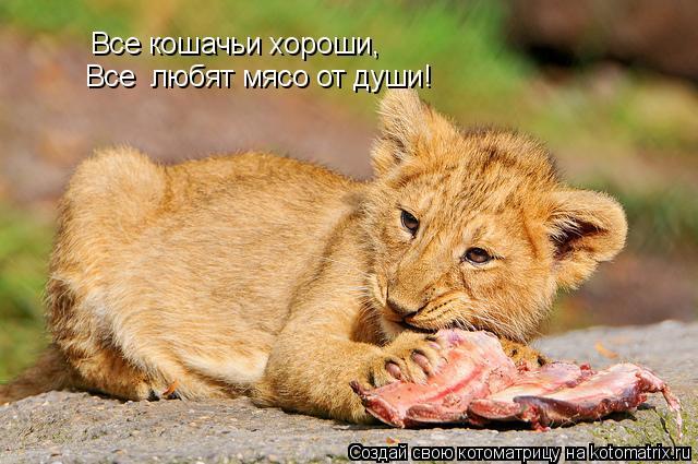 Котоматрица: Все кошачьи хороши, Все  любят мясо от души!