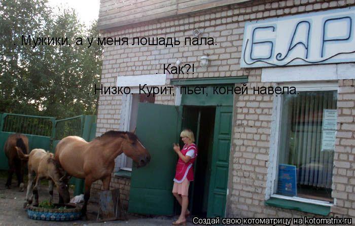 Котоматрица: — Мужики, а у меня лошадь пала…  — Как?!  — Низко. Курит, пьет, коней навела…