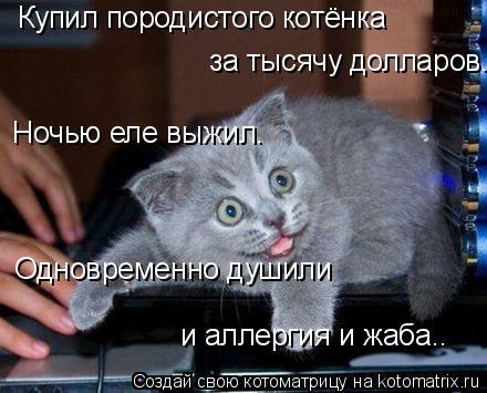 Котоматрица: Ночью еле выжил.  Одновременно душили  и аллергия и жаба..  Купил породистого котёнка  за тысячу долларов.