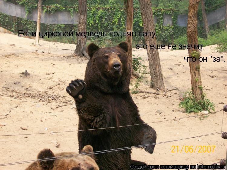 """Котоматрица: Если цирковой медведь поднял лапу,  это ещё не значит,  что он """"за""""."""